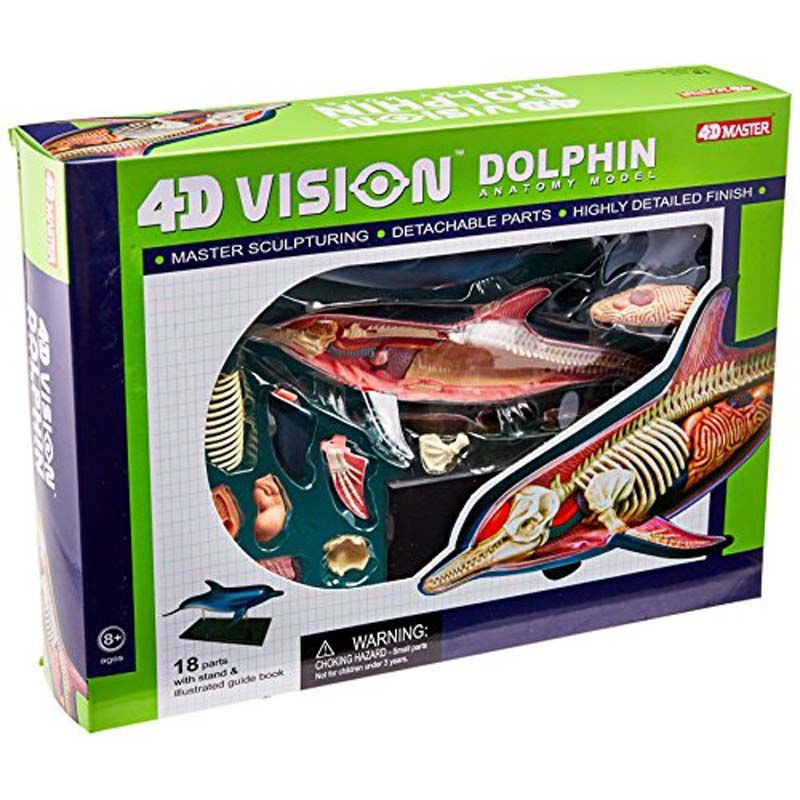 Dolphin Anatomy Model