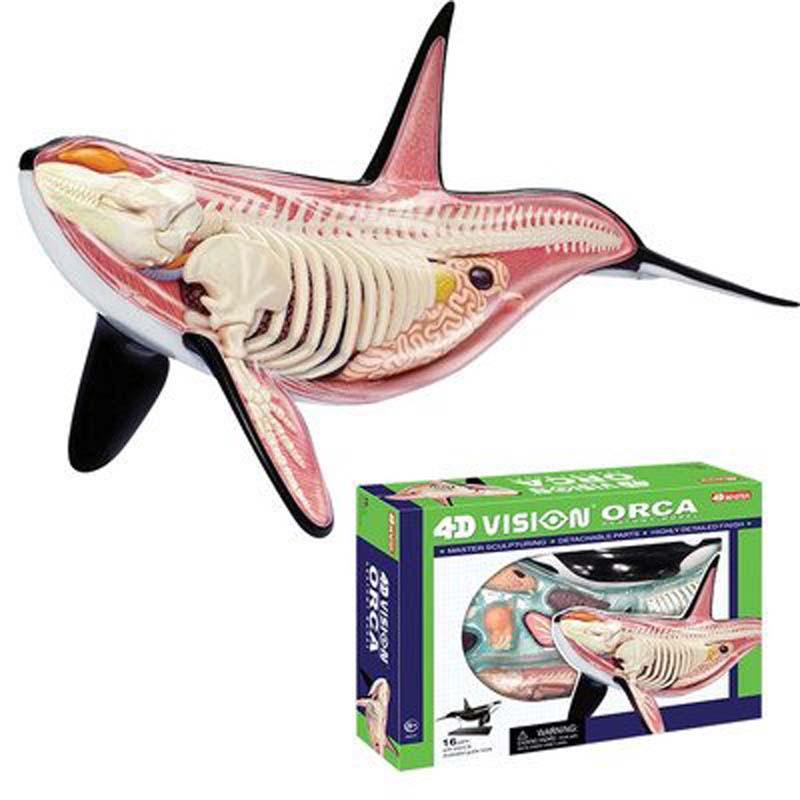 4D Orca Model