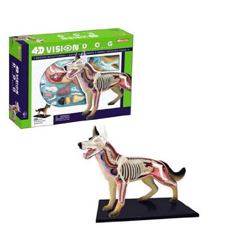 4D Dog Model