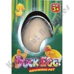 Hatching Duck Egg