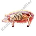 4D Pig Model