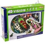 4D Frog Model