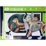 4D Cat Anatomy