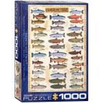 1000 Piece Puzzle - Salmon & Trout