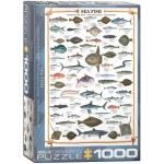 1000 Piece Puzzle - Sea Fish