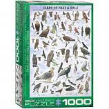 1000 Piece Puzzle - Birds of Prey & Owls